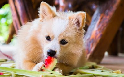 Feeding Fruit & Vegetables to Dogs