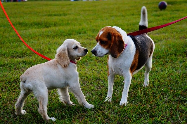Off-Leash Dog Parks
